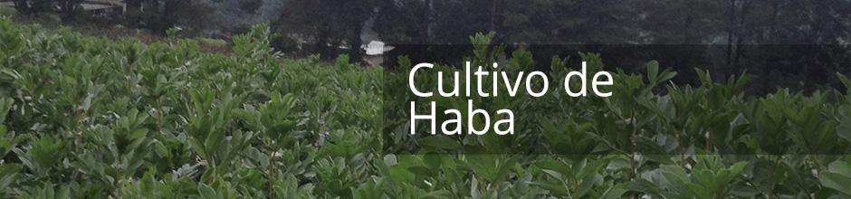 Cultivo de Haba